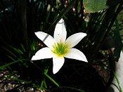 Unknown White