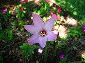 Pink (Vetme2 ebay seller)